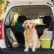 10 Tips for Successfully Moving with Pets